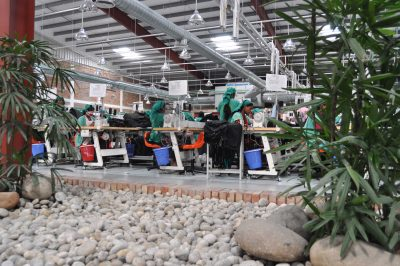 Bangladesh's RMG sector employs over 4 million people, about 80 percent of whom are women from rural communities. Above, a plants in a garment factory promote a greener work environment. Photo/BGMEA