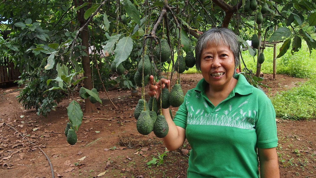 Woman farmer poses with avocado tree
