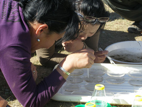 Identifying waterbugs and interpreting the results.