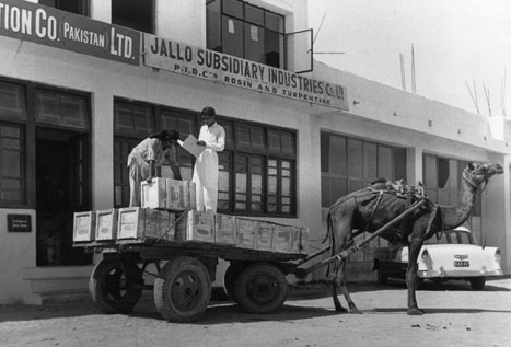 When the Books for Asia program began operation in Pakistan in the 1950s, books were delivered by camels, as pictured here.